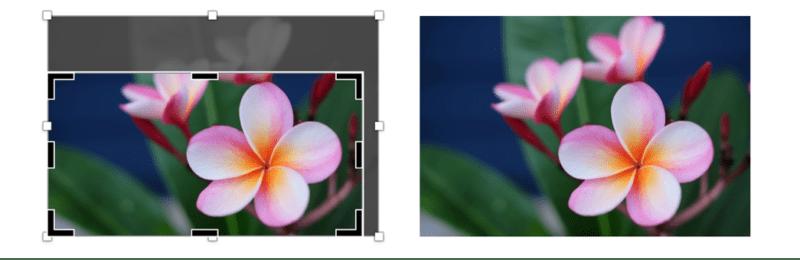 cropping av bilde med blomst