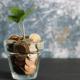 Grønn plante i glass med mynter